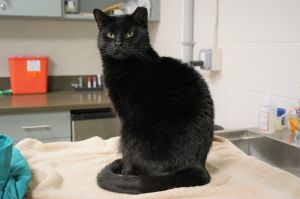 Zamira came to the Shelter because her owner passed away She has quickly adjusted to the Shelter en