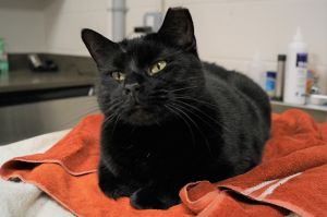 Zamira came to the Shelter because her owner passed away She has quickly adjust
