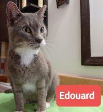 Édouard (FIV+) 1
