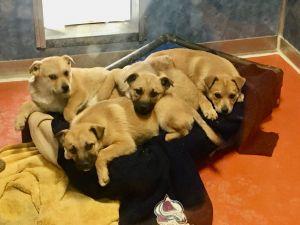 Puppies! (Garnet and Flint)