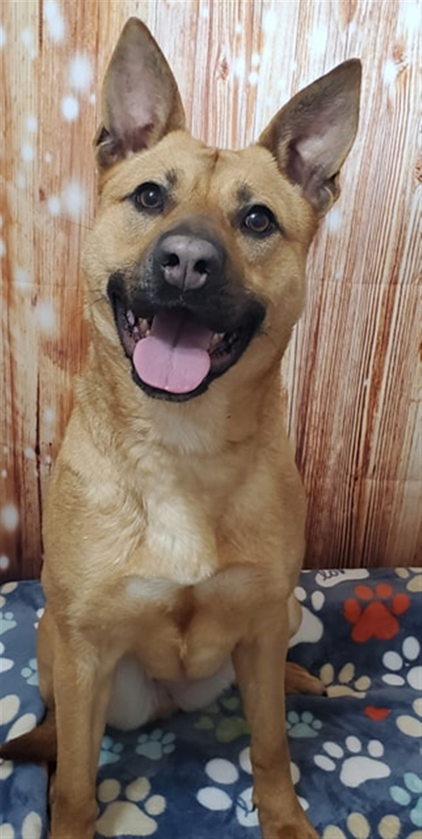 Mariah, an adoptable Shepherd Mix in McMinnville, OR