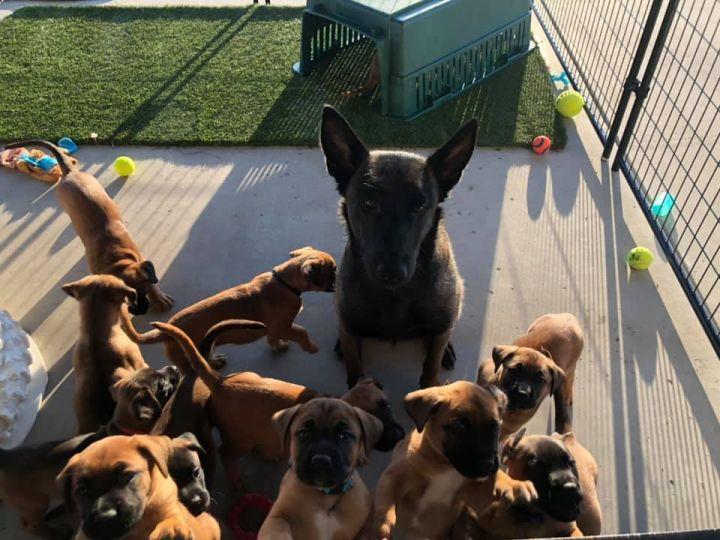 Carmen Puppies 1