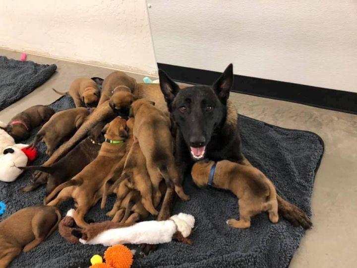 Carmen Puppies 2