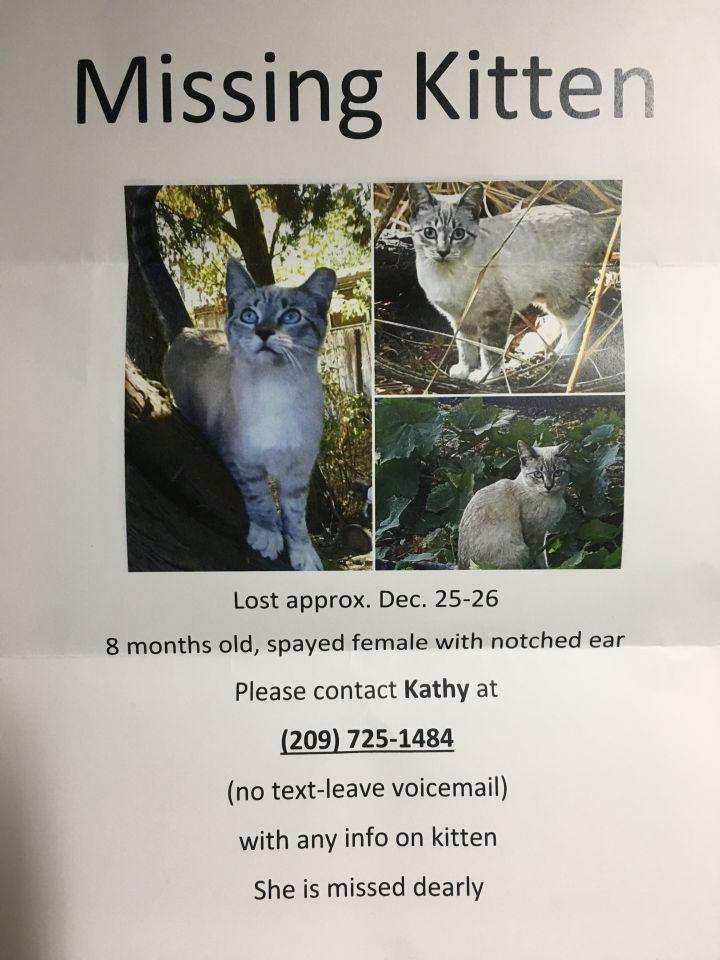 MISSING CAT: Jewel 2