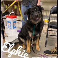 Elphie 4