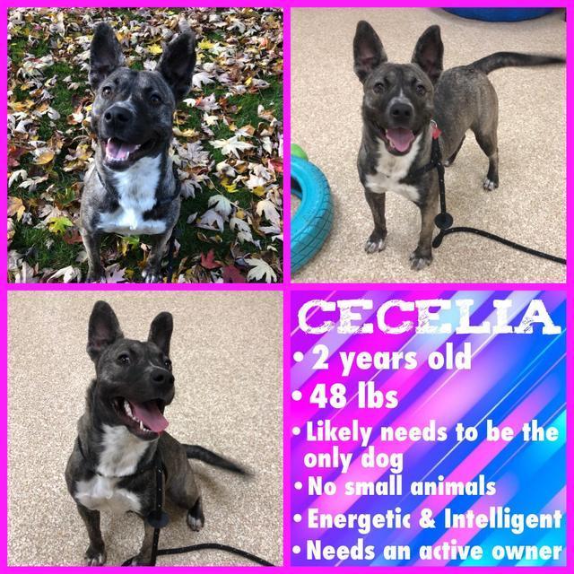 Cecelia 2