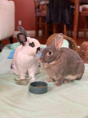 Sammy & Ella (BONDED PAIR!!)