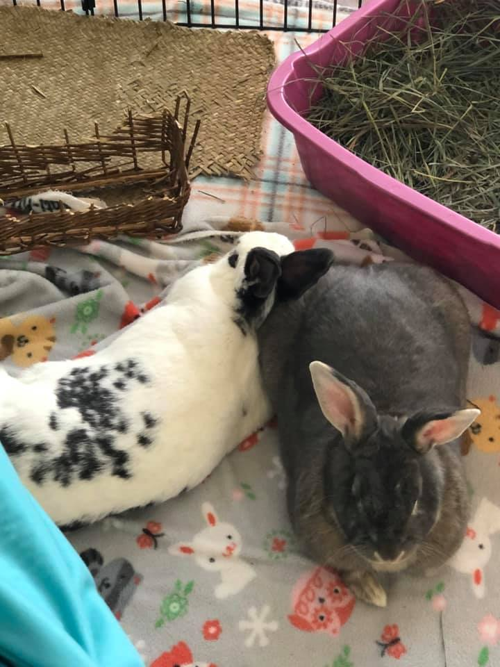 Sammy & Ella (BONDED PAIR!!) 2