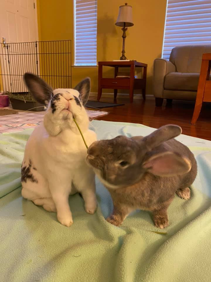 Sammy & Ella (BONDED PAIR!!) 3