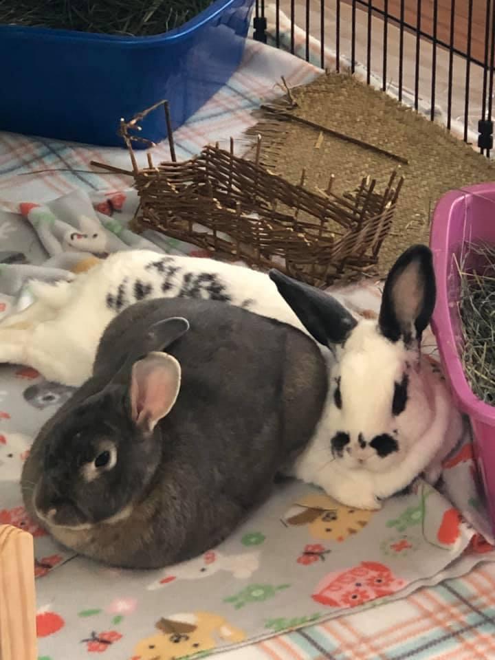Sammy & Ella (BONDED PAIR!!) 4