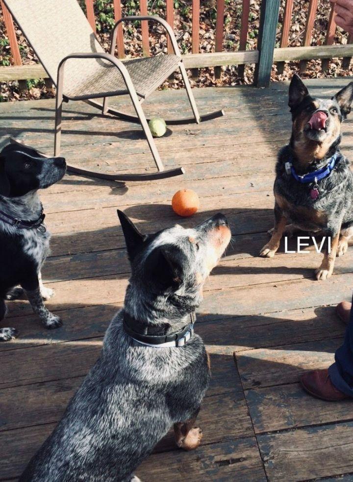 Levi 3