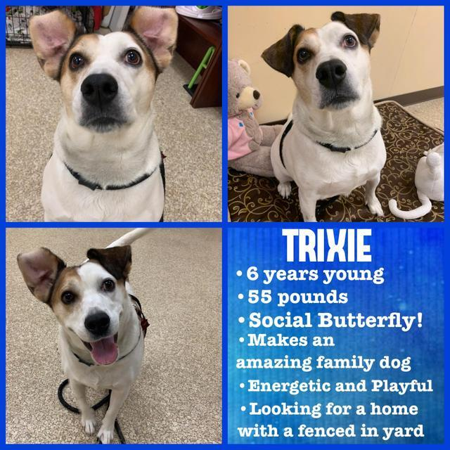 Trixie (Eve) 5