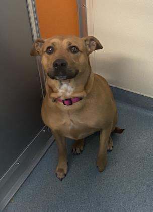 Bella, an adoptable Mixed Breed in Clarks Summit, PA