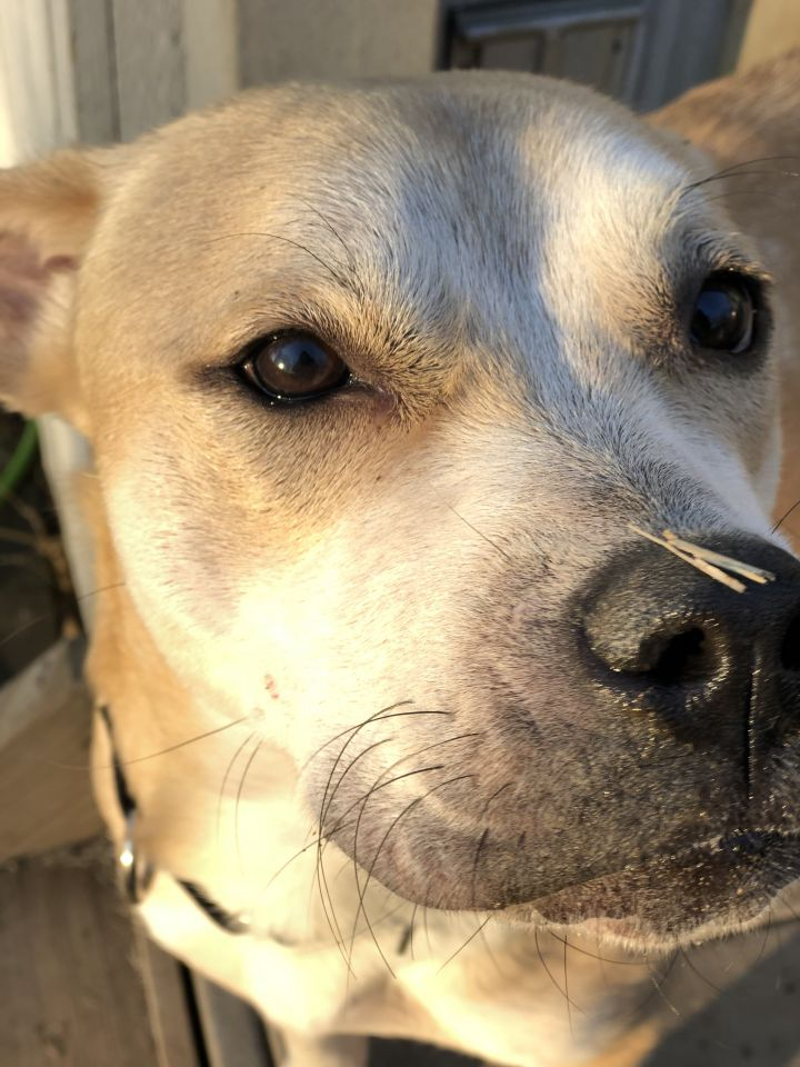 Rita ~ sweet doggie angel~ 1