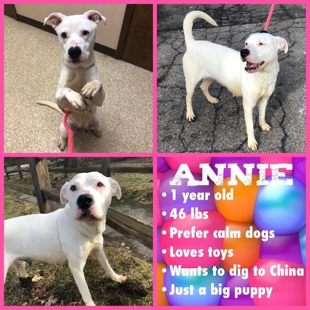 Annie 4