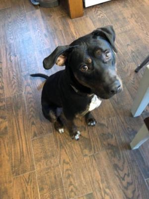 You can fill out an adoption application online on our official website Meet Yipper His name came