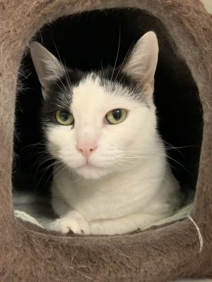 Sweet and petite Squeaky is more than ready for her forever home This 4 year old girl is a little