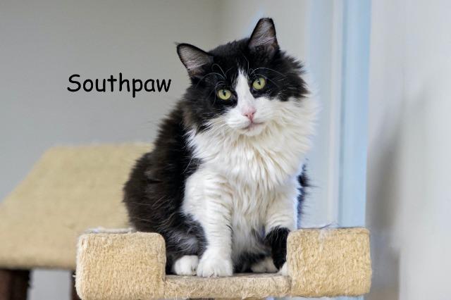 Southpaw 2