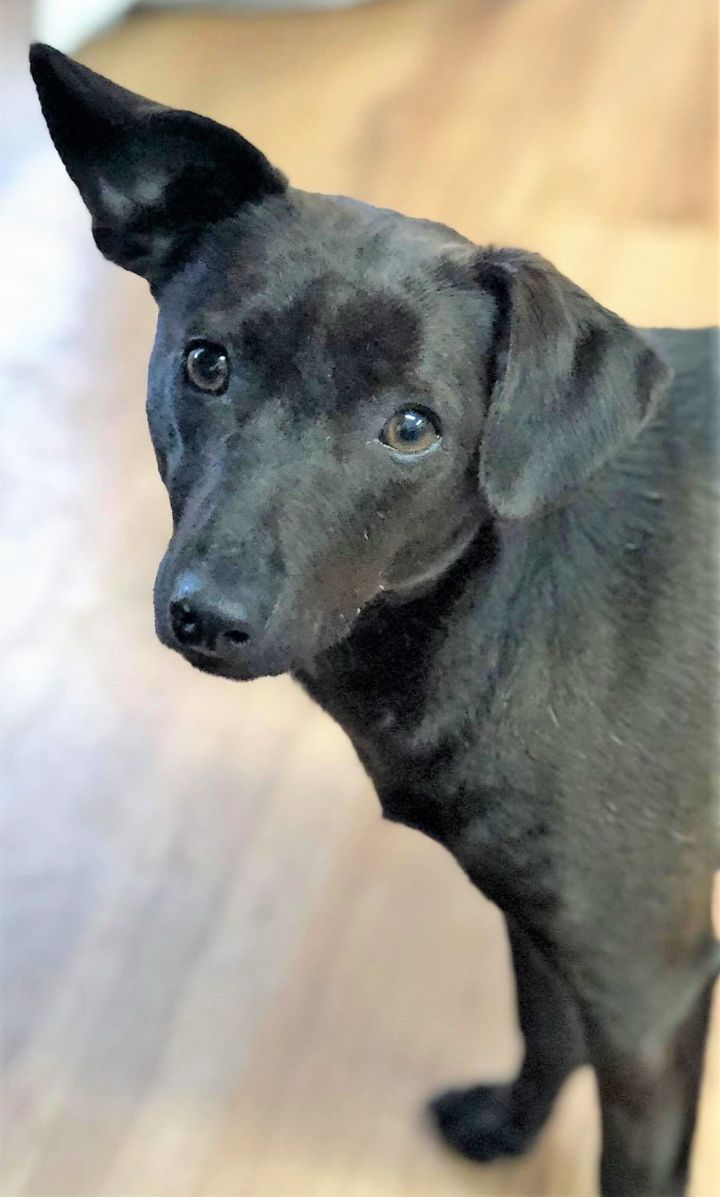 James, an adoptable Mixed Breed in Northwood, NH