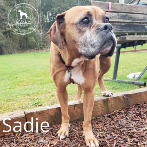 Sadie 2