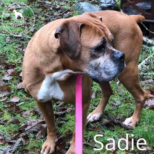 Sadie 3