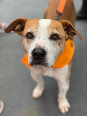 Howdy My name is Barney and Im a sweet 5 year old boy seeking my furever family I spent the