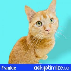 Frankie is a fun and adventurous cat who is looking for love He will delight you with his adorable