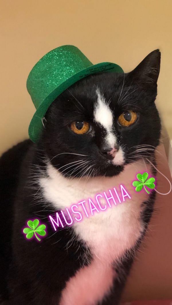 Mustachia