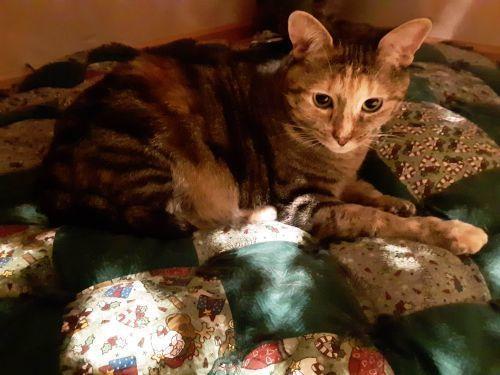 Dr. Callie - Indoor/Outdoor Cat 3