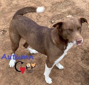 Autumn loves to be loved very person centric gets along well with other dogs weighs about 45 lbs