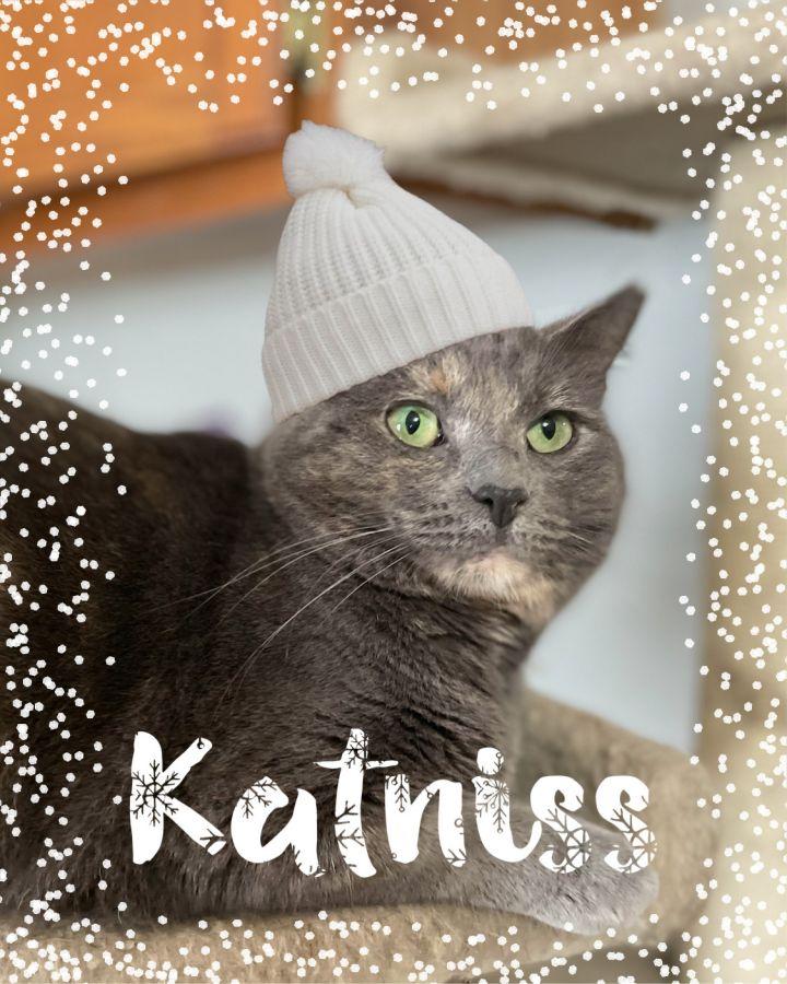 Katniss 1