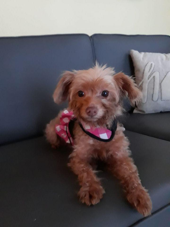 Minnie (on medical hold) 4