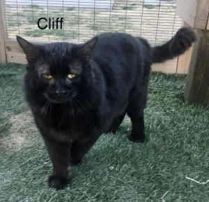 Cliff is at Petsmart