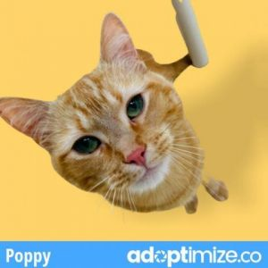 THE CUTEST LITTLE TRIPOD YOU WILL EVER MEET Poppy LOVES people and LOVES to play and is looking for