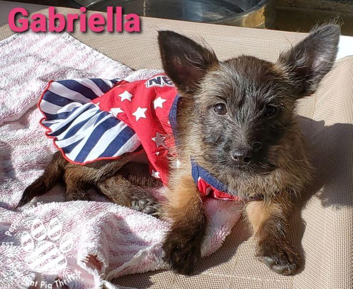 Gabriella 1
