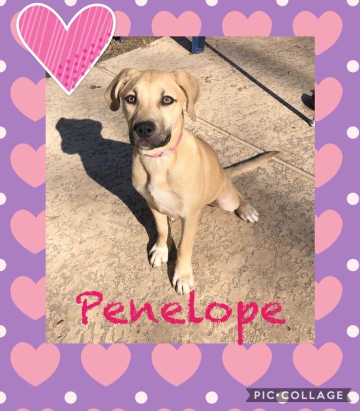Amazing Penelope 1