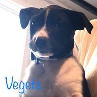 Vegata 3