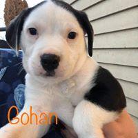 Gohan 1