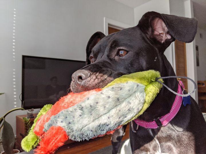 Gumball - My Adoption Fee is Sponsored! 5
