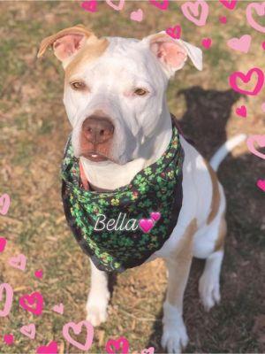 BellaDona - update! adopted!
