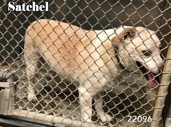 Satchel 1