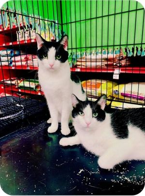 This is Mowry on left and Mcvan on right they are 2 year old brothers who are a bonded pair