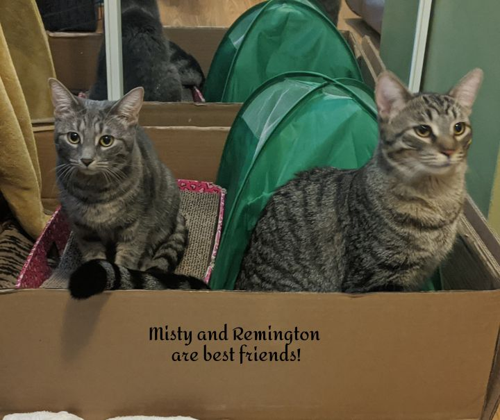 Misty and Remington (bonded pair) 3