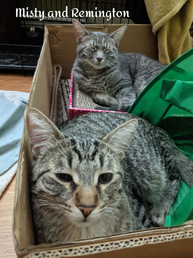 Misty and Remington (bonded pair)