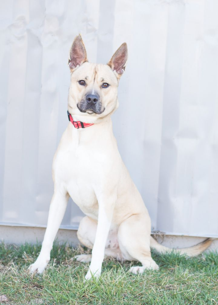 Denver, an adoptable Mixed Breed in Cape Girardeau, MO