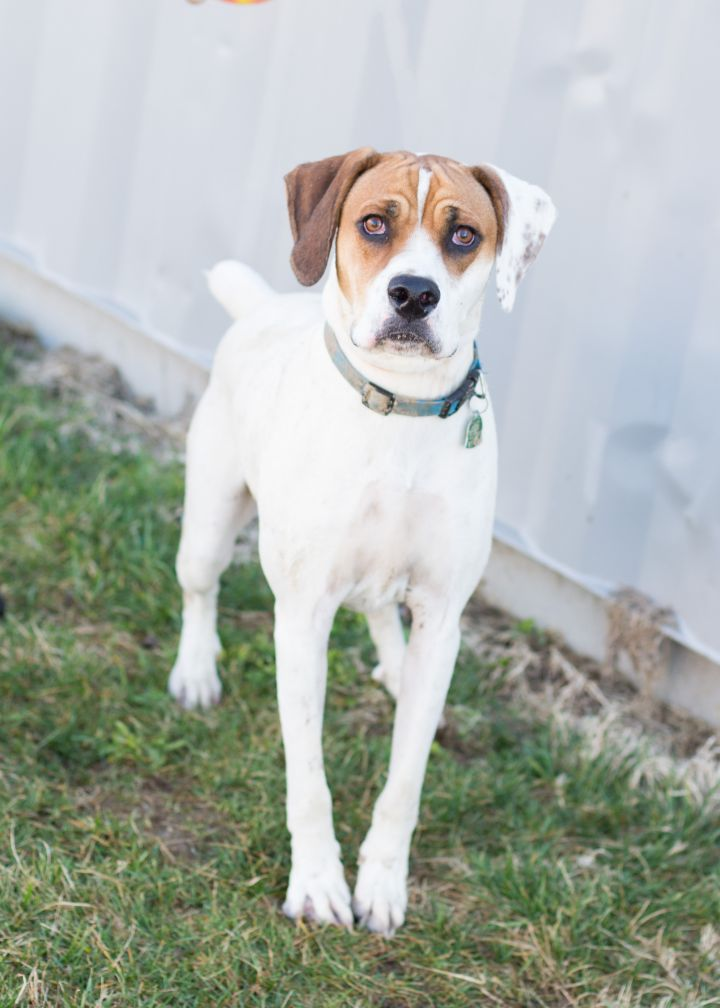 Hush, an adopted Mixed Breed in Cape Girardeau, MO