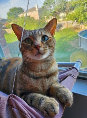 Say hello to Maddie Maddie is a torbie with some purrsonality She like to play and make biscuits b