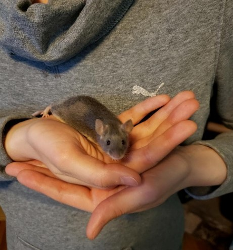 Hippo, an adopted Mouse in Saint Paul, MN