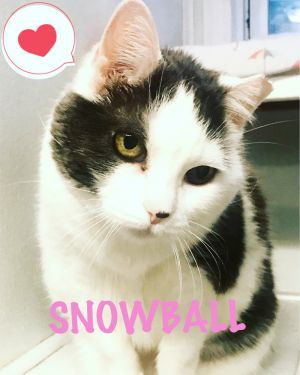Hello my name is SNOWBALL I am a 4 year old cutie who is curious and talkative I love humans