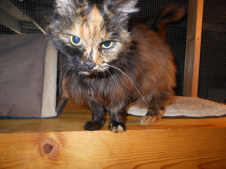 Miss Lucy-Reduced Adoption Fee 1